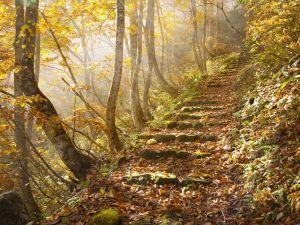 autumn-leaves-japan_25290_990x742