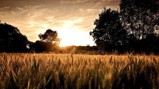 sunsets_landscapes_nature_wheat_1920x1080_wallpaper_Wallpaper_2560x1440_www.wallpaperswa.com