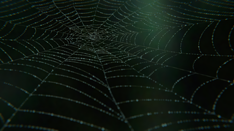 SpiderWebFinnished03