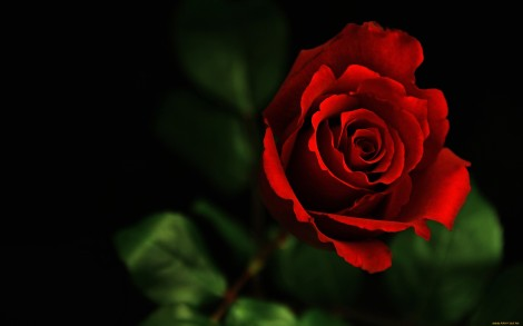 3d-abstract_widewallpaper_red-rose_47388
